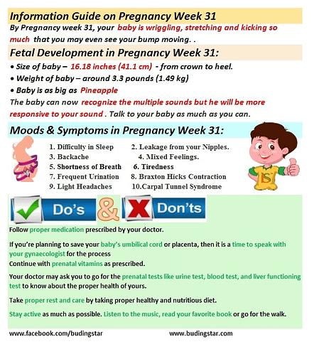 pregnancy-week-31-budding-star